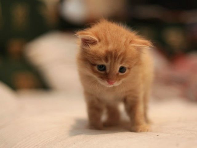 What color is this kitten?