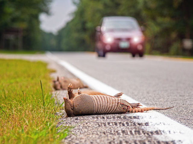 You are legally permitted to salvage roadkill for its meat in this state.