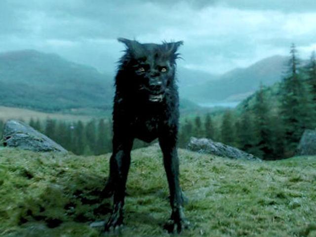 wolf sw 120