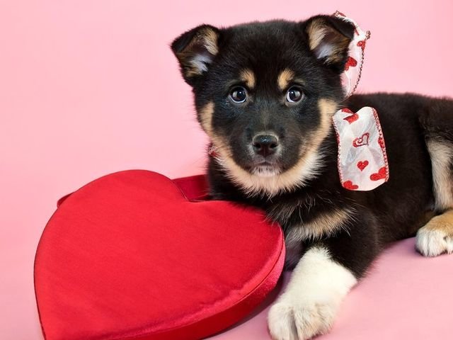 It's true! There's a surprisingly large market for pet Valentine's Day gifts.