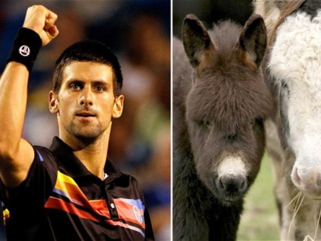 Djokovic once bought the entire annual production stock of a farm producing donkey cheese.