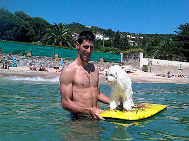 Djokovic attempts to take his pet poodle Pierre everywhere he goes around the world, at great expense.