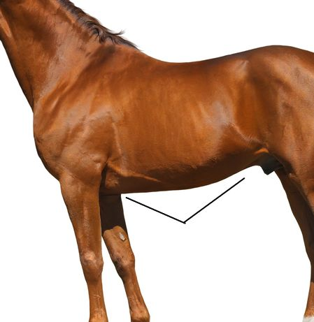 Quiz Can You Identify These Parts Of The Horse Ihearthorses