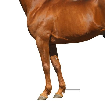 Quiz can you identify these parts of the horse playbuzz ccuart Gallery