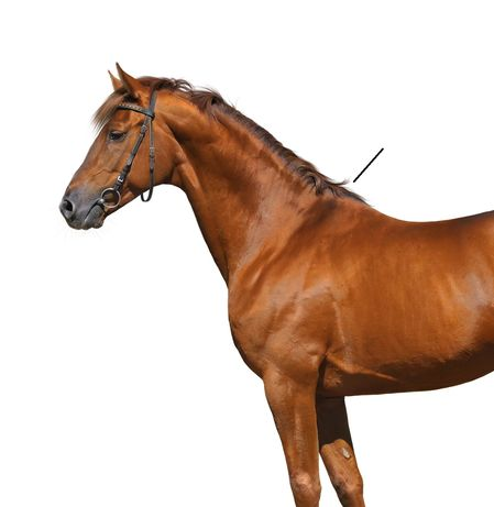 Quiz can you identify these parts of the horse ihearthorses congratulations ccuart Gallery