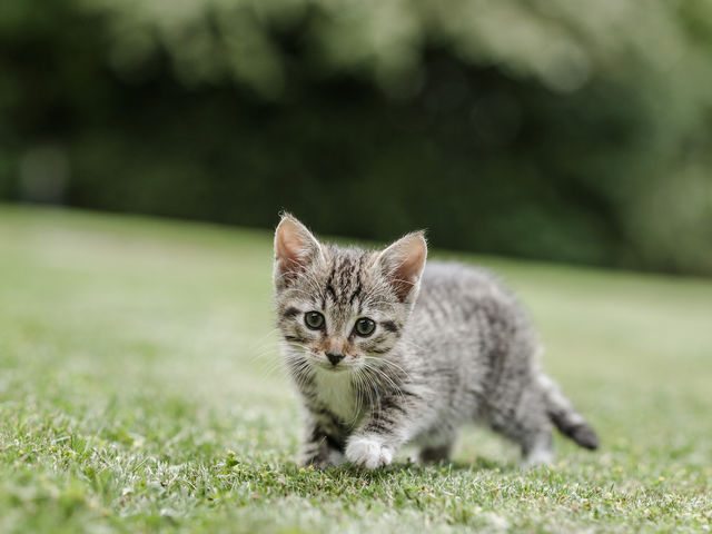 True or false, more people in the U.S. own cats than they do dogs: