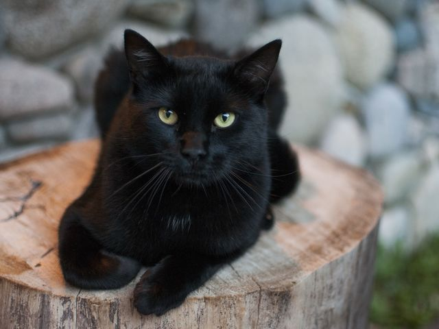 In what two countries are black cats actually considered lucky?