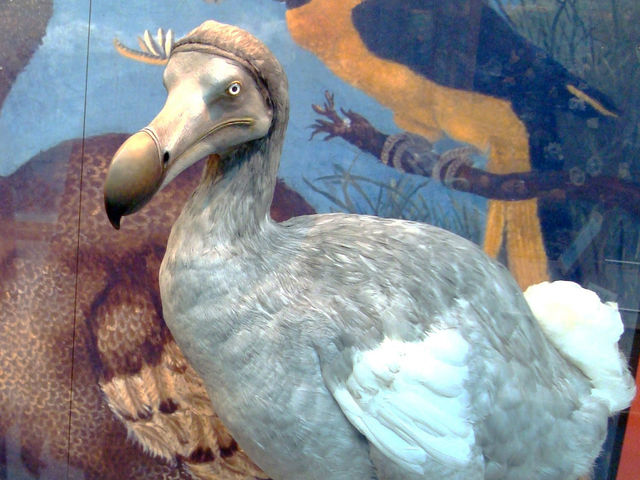 This long extinct bird's name is...