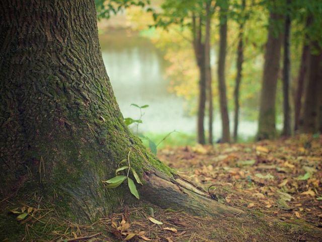 No folclore brasileiro, quem é o protetor das árvores e dos animais?