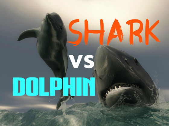 SHARK WEEK: Is Your Brain More SHARK or DOLPHIN? | Playbuzz
