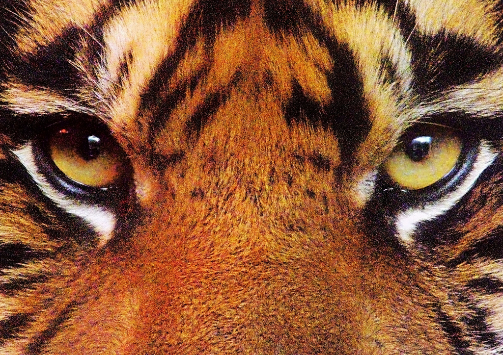 Can You Guess Which Animals Eye This Is Playbuzz - 24 detailed close ups of animal eyes