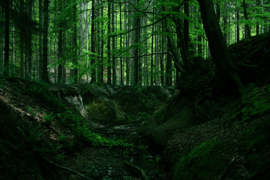 fangorn forest best quotes