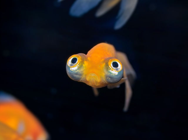22 unbelievable facts about your eyes for What fish has eyelids
