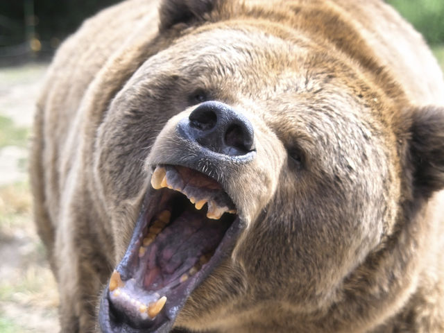 angry animal aggravate mean webster playbuzz istock re merriam
