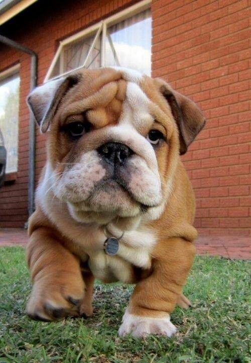 Beautiful White Chubby Adorable Dog - 3456fa29-9e45-4b83-98cc-da544f8d885d  Trends_124128  .jpg