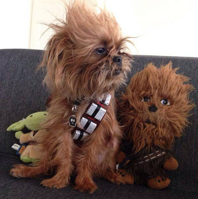 Rate The Best Dog Halloween Costumes Of All Time | Playbuzz
