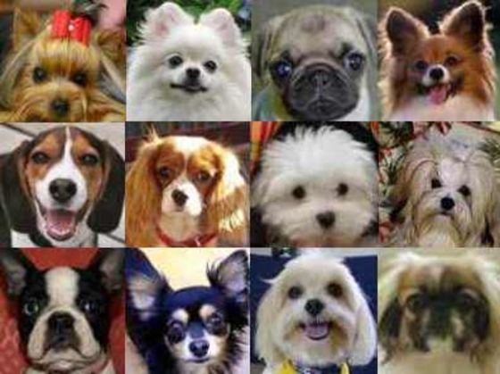 What Kind Of Dog Should You Adopt Playbuzz