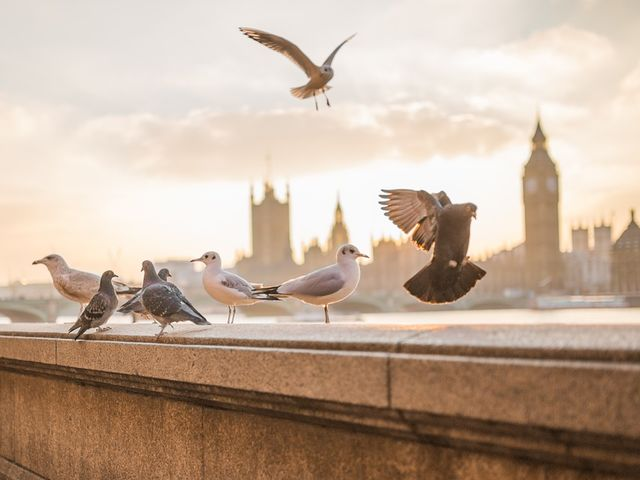 In 2015, miniature Wi-Fi transmitters began to be attached to pigeons in London. The pigeons sit on telephone wires and thereby recharge the transmitters.