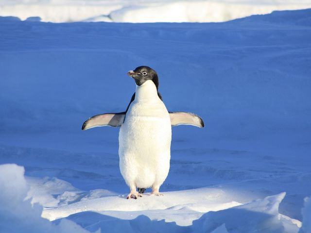 If you really startle a penguin, it can fly about ten meters.