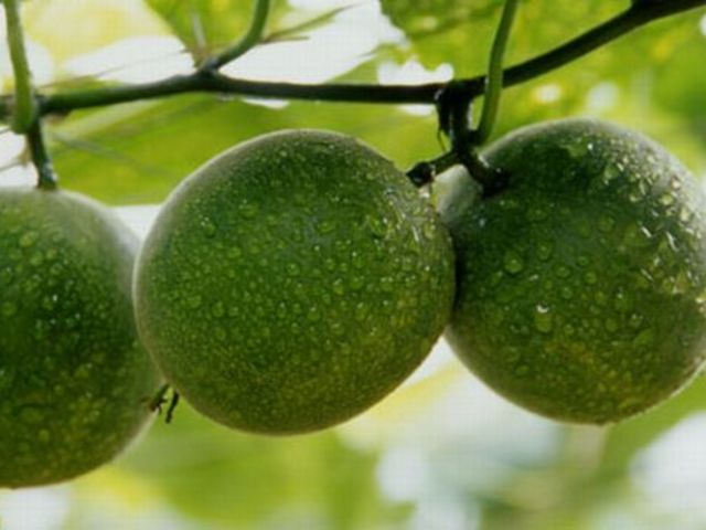True. The fruit comes from the Siraitia grosvenorii plant (known as Luo Han Guo or monk fruit), which grows in China.