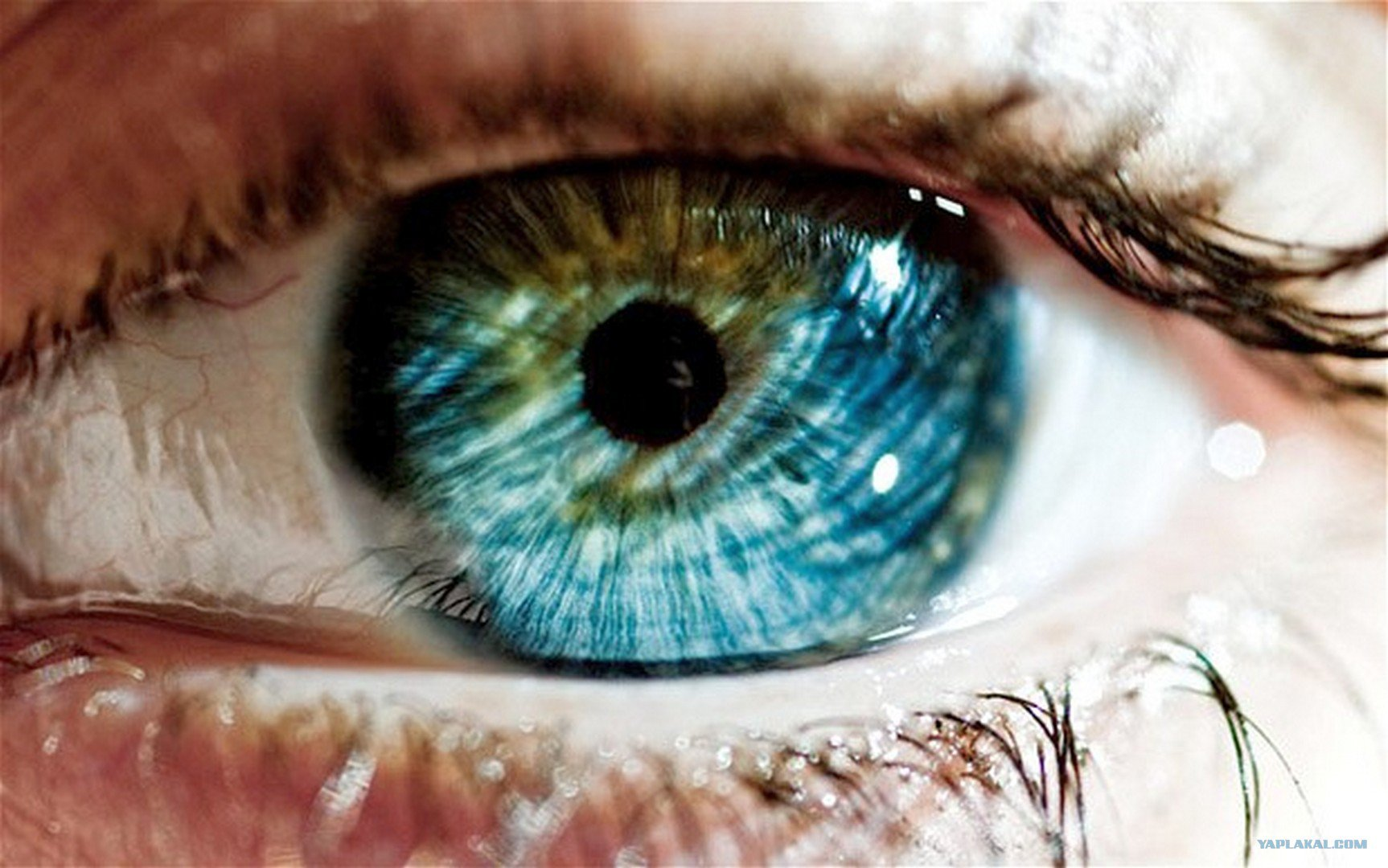 What color should your eyes be playbuzz nvjuhfo Image collections