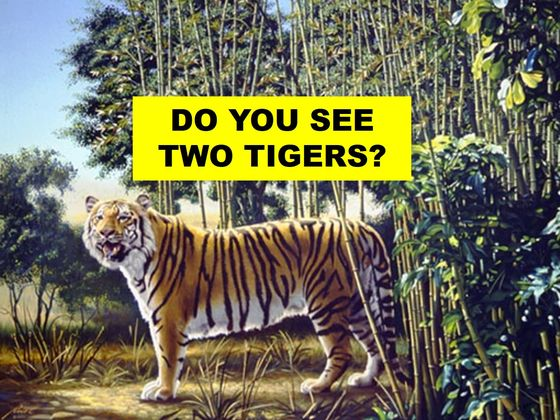 There Are TWO Tigers In This Picture, Can You Spot The Second One?