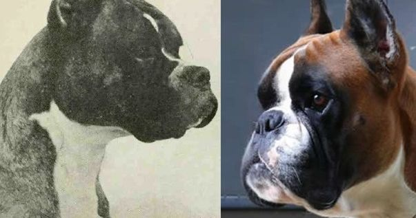 14 Dog Breeds Then And Now Playbuzz