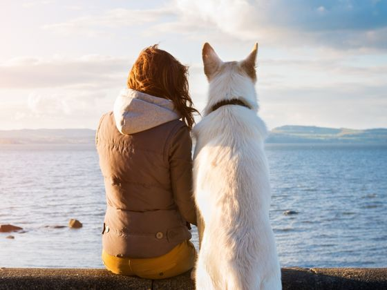 What Dog Breed Is Best For You Quiz Playbuzz