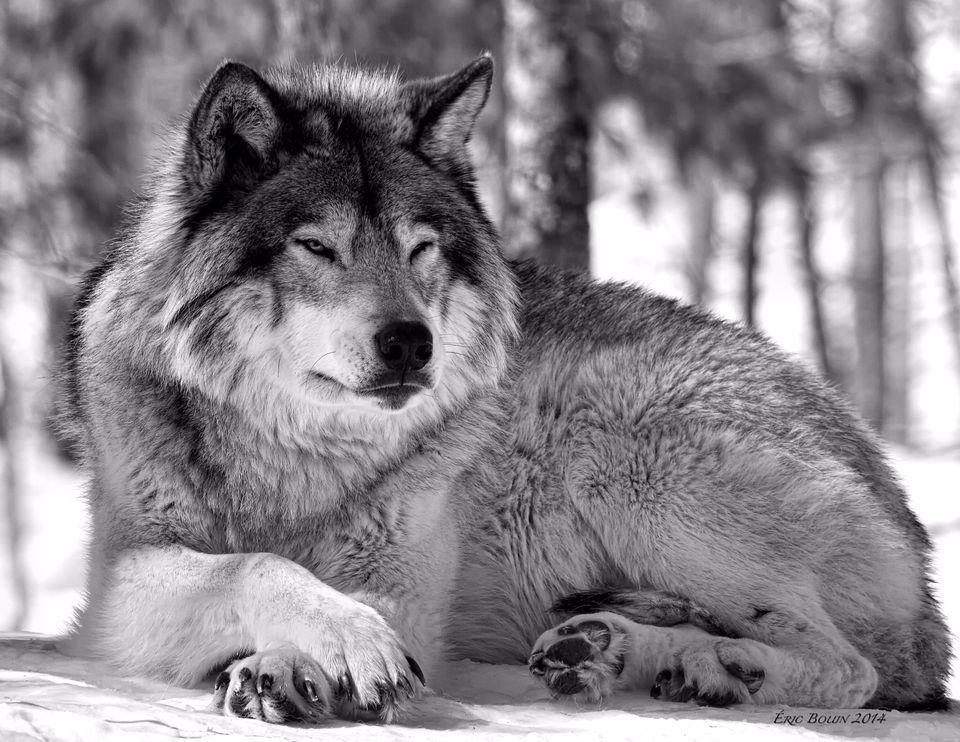 PRPG: Dark Wolf & Admin: Story of the Forest 79b99bce-f562-4798-8181-c8b3d9b2d8ff
