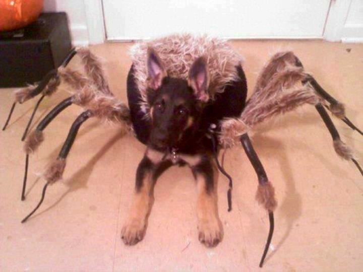 & Rank The Cutest Dog Halloween Costumes Of All Time | Playbuzz