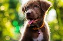 According To Your Personality Which Mixed Breed Puppy Should You Adopt?