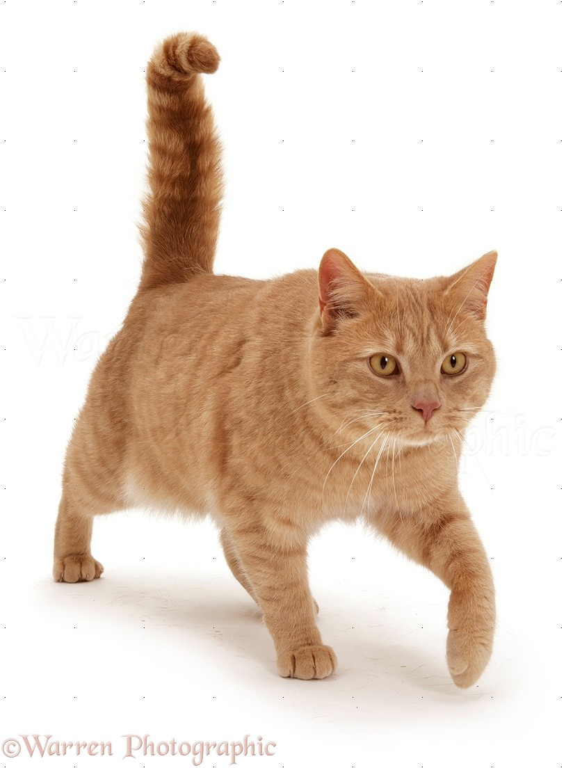 Can You Identify Cat Breeds By Kitten