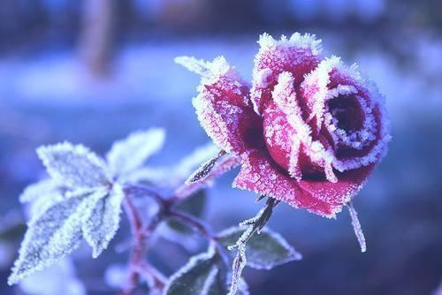 Pour semer des fleurs dans le coeur ... - Page 2 3e9478ae-bea4-4e9f-97a8-d1da520c8296