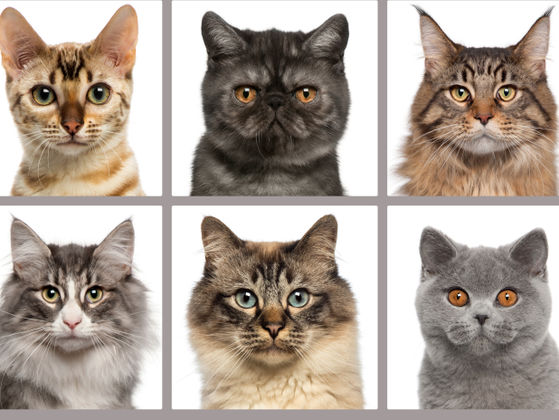 remove cat urine odor from carpet