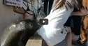 A Little Girl Was Just Snatched Into The Water By A Wild Sea Lion!