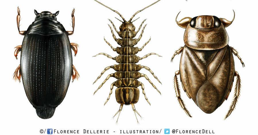 saurez vous reconnaitre ces insectes qui vous veulent du mal playbuzz. Black Bedroom Furniture Sets. Home Design Ideas