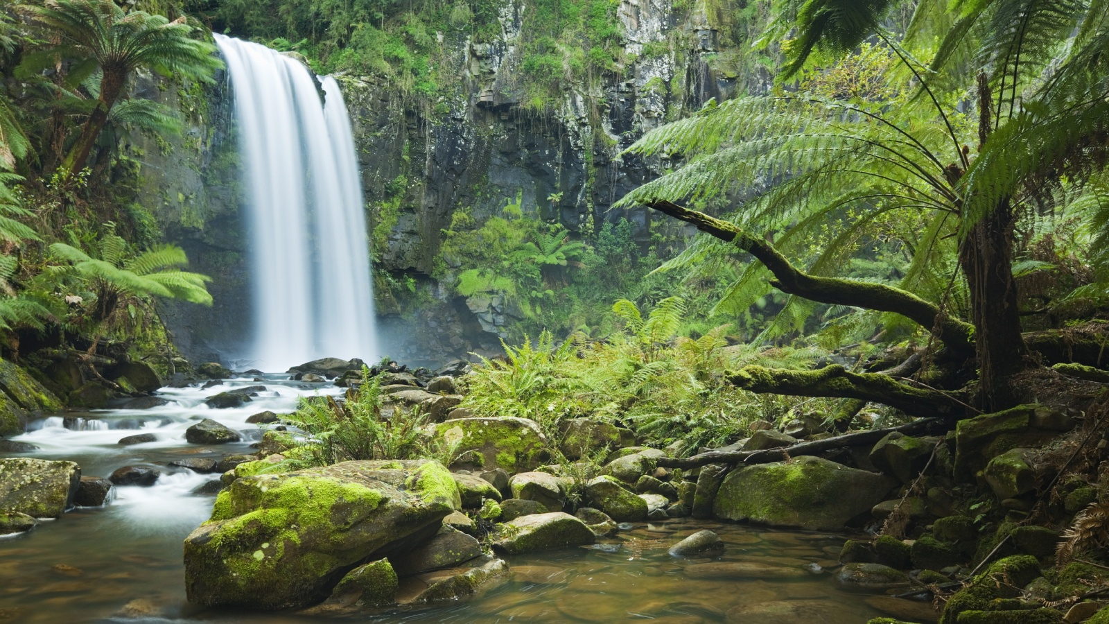 African rainforest wallpapers gallery african rainforest sciox Image collections
