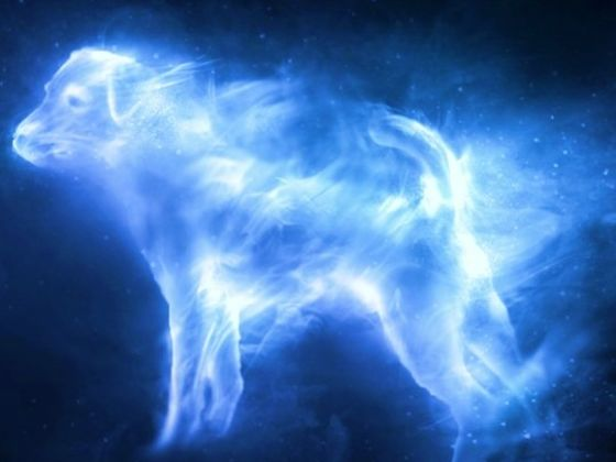 What Is Your Patronus >> What Form Does YOUR Patronus Charm Take? | Playbuzz