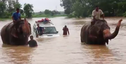 In Nepal, Elephants Are Rescuing People From Devastating Floods And It's Everything