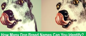 How Many Dog Breed Names Can You Identify?
