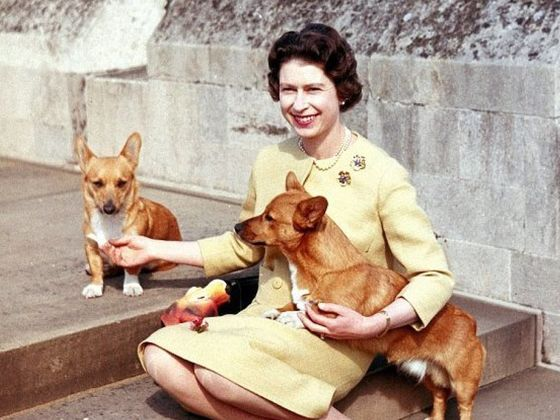 Holly, One Of The Queen's Corgis, Has Died