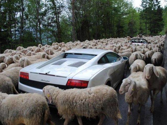 Kumpulan Foto Lucu tentang Kemacetan dari Seluruh Dunia