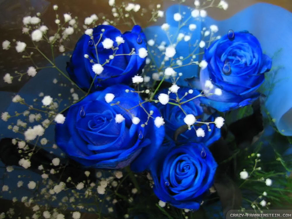 What Do The Color Of Roses Tell You Playbuzz