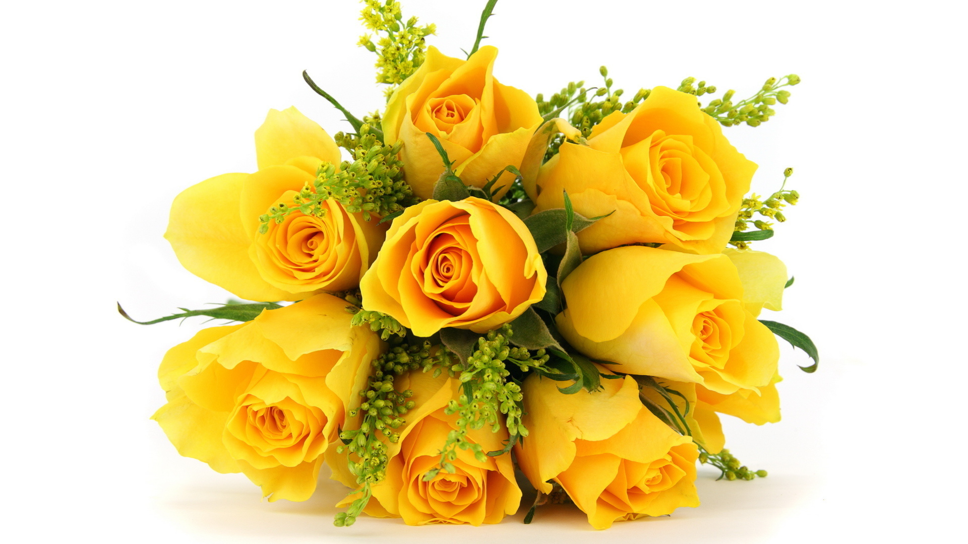 What do the color of roses tell you playbuzz mightylinksfo