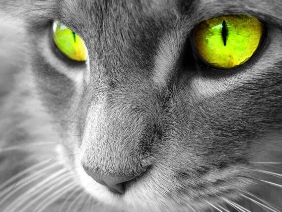 Warrior Cat Quizzes Trivia