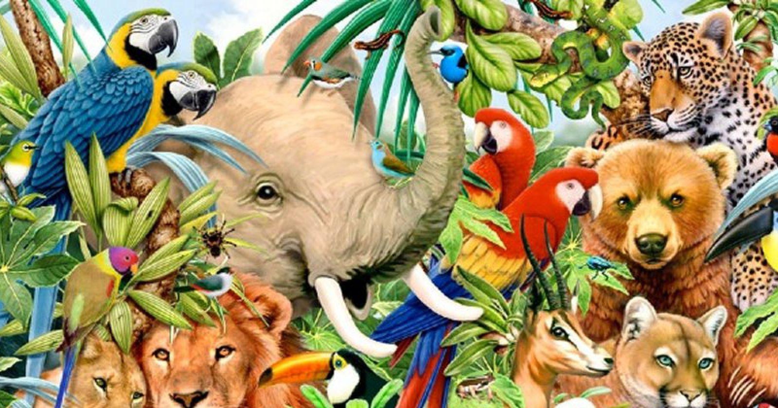 animals playbuzz