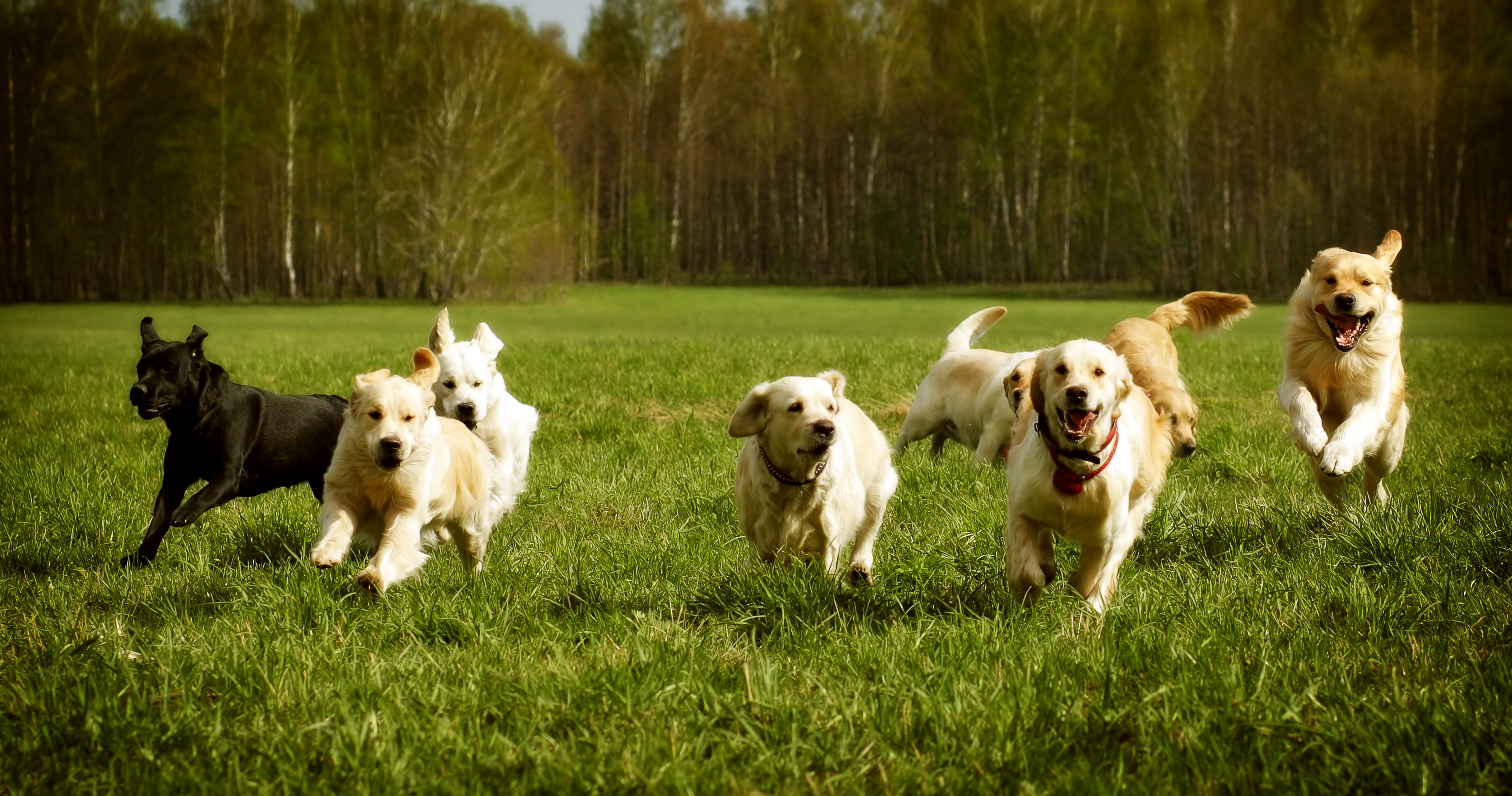 Playbuzz What Dog Breed