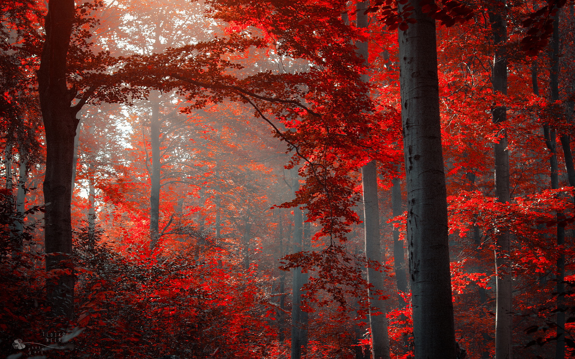 Great Wallpaper Harry Potter Autumn - ad9a8824-cb21-4580-b04a-d276a0781072  Pictures_547122.jpg