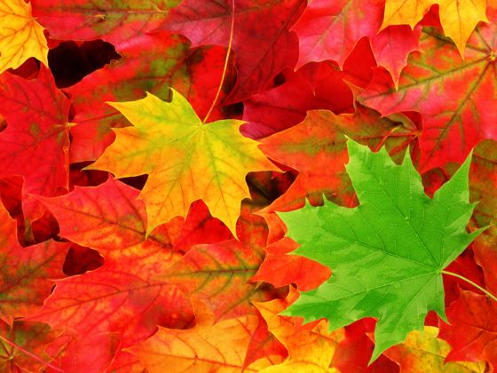 Which Color Of Autumn Matches Your Spirit