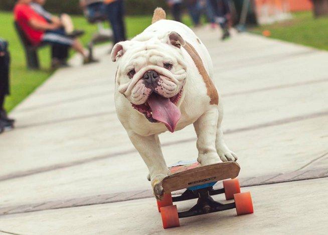 Resultado de imagen de perro andando en patinete